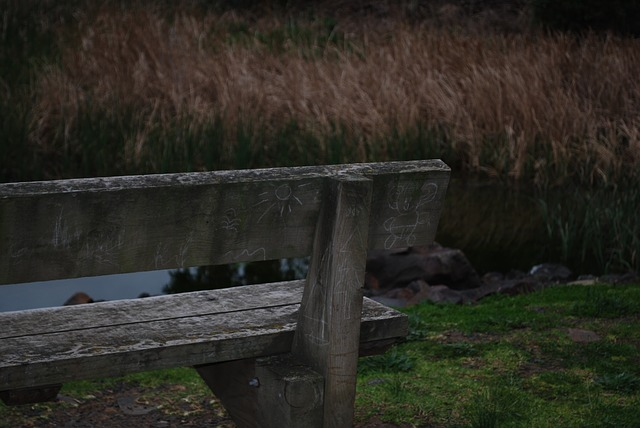 bench overlooking a marsh