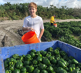 Rosarian Team Picks 8,000 Pounds of Peppers to Help Feed the Hungry