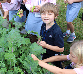 Rosarian Academy's Gardens Promote Stewardship of the Planet and Service to Others